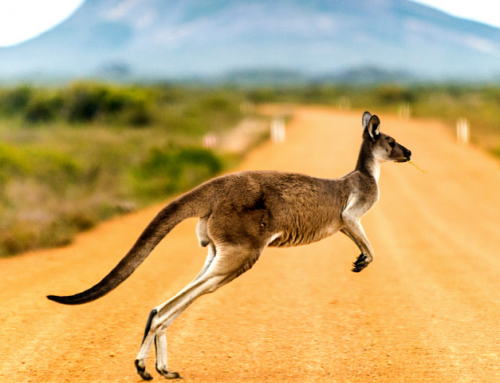 10 Reasons to Visit Australia